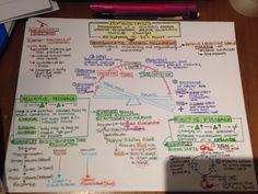 Homeostasis concept map complete! —> Pre-SLP is now blogging @ future-slp.tumblr.com