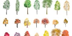 A huge set of colour trees in photoshop finished in different artistic style, showing both summer an...