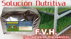 Guia: Producción Intensiva de Forraje Verde : .: Hydro Environment .: Facial, Mexico, Personal Care, Pest Control, Hothouse, Facial Care, Personal Hygiene, Facials, Face Care