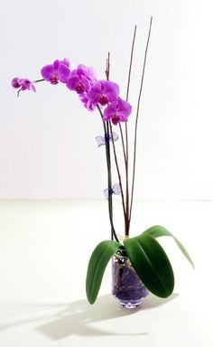 orchids! gift-ideas