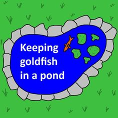 Everything you need to know about building & maintaining an outdoor goldfish pond