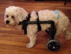 This is an article about how to make a wheelchair for your dog.