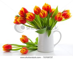 Red tulips?