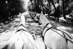 BELLE WEDDING   Hochzeitsplanung #weddingplanner #hochzeitsplaner #swiss Horses, Animals, Wedding Planer, Switzerland, Animales, Animaux, Animal, Animais, Horse