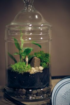 Nerve Plant and Moss Terrarium by joshleo, via Flickr