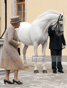 Queen Elizabeth ll receives a rare Lipizzaner horse when she visits Lipica Stud on the second day of a State Visit to Slovenia on October 22 2008 in. Elizabeth Ii, Pretty Horses, Beautiful Horses, Animals Beautiful, Spanish Riding School Vienna, Lippizaner, Lipizzan, Types Of Horses, Her Majesty The Queen