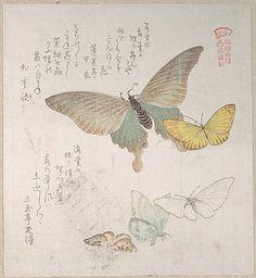"""Various Moths and Butterflies"", Kubo Shunman (1757–1820) - Surimono (privately…"