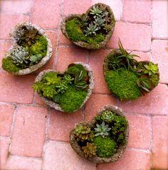 succulent garden in hypertufa heart by bertanicals