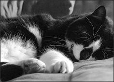 Timeline Photos, Facebook, Cats, Photography, Animals, Gatos, Photograph, Kitty Cats, Animaux