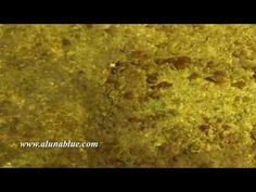 Stock Footage - Video Backgrounds - Hyper Nature 0111 Stock Video