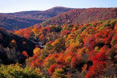 autumn in the smokey mountains | Brilliant Autumn Colors Paint Great Smoky Mountains of Gatlinburg