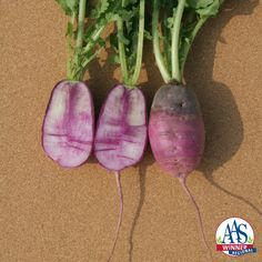 Radish Sweet Baby F1 2016 Edible – Vegetable Winner - Sweet Baby accurately describes the look of this beautiful purple/white/rose colored radish.