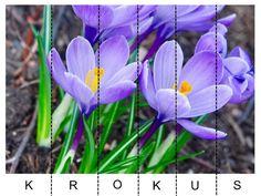 Pro Šíšu: Jarní květiny - skládačka