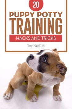 One of the most trying experiences in any dog parent's life is potty training. No matter how many dogs you have potty trained in the past, it never stops being a frustrating experience. Every dog is different, and they all learn at different rates. Having some puppy potty training hacks up your sleeve will help you to train even the most stubborn pups. #dogs #puppies #puppy #dogtraining #puppytraining #potty #toilet #housebreaking #teachdogtocome