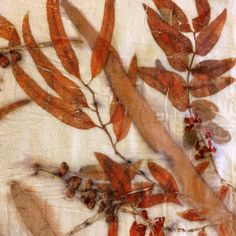 Teñido sobre crepe de lana. #ecoprint #iritdulman #naturaldye #eucalyptus