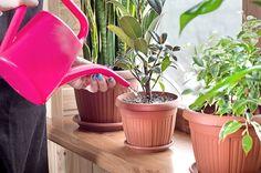Tá najlepšia starostlivosť o izbové rastlinky? Nech sa páči, tu sú overené rady našich čiatetliek. Gerbera Jamesonii, Fast Growing Plants, Growing Vegetables, Types Of Soil, Types Of Plants, Ebb And Flow Hydroponics, Epsom, Smart Garden, Good Environment