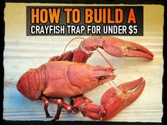 How to Build a Crayfish Trap for Under $5 Crawfish Traps, Trout Fishing, Fishing Lures, Shtf, Outdoor Survival, Survival Tips, Survival Stuff, Survival Skills, Fishing Guide