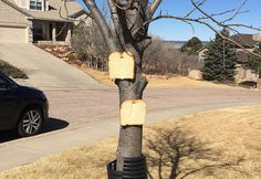 ICYMI: There's An Online Community About Stapling Bread To Trees #art