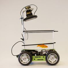 "Goldfish-driven vehicle designed for ""enhanced pet mobility""."