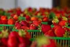 ⭐ strawberries strawberry fruits  - get this free picture at Avopix.com    ▶ https://avopix.com/photo/18433-strawberries-strawberry-fruits    #berry #strawberries #strawberry #fruit #fruits #avopix #free #photos #public #domain