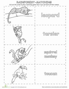 Learn the Rainforest Animals Worksheet - several sheets with different rainforest animals that can be colored. Could have Lily add a fact about each animal on the back side of the name to play a matching game. Or could add fact to make it like a little book - South America Week 9-11