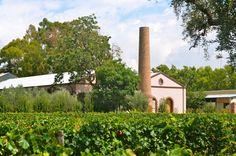 Vista desde el #viñedo @BodegaLagarde #Mendoza #vineyard