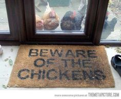 Beware of the Chickens.I need this-Chuck attacks when you get near his hens in the coop! Farm Animals, Funny Animals, Cute Animals, Animal Funnies, Animal Humour, Funniest Animals, Animal Antics, Mr Macs, Chicken Lady