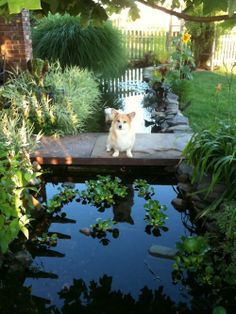 1000 Images About Water Features Garden On Pinterest