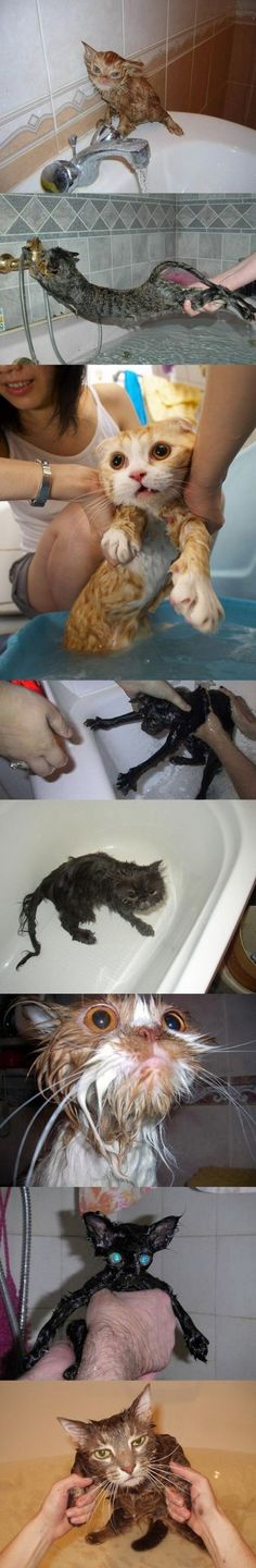 Cats in the bath. The black one is horrifying.