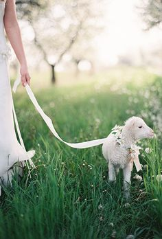 Brides.com: . This bride dressed up her adorable baby lamb with dainty white flowers and a gauzy leash for an ethereal wedding portrait.