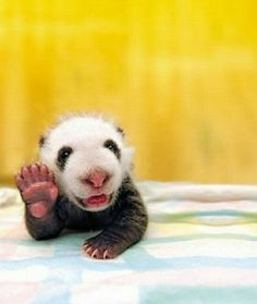 Hello there.....high five!