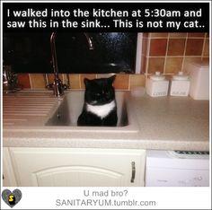 #cats #funny #awkward