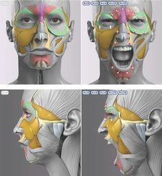 Exceptional Drawing The Human Figure Ideas. Staggering Drawing The Human Figure Ideas. Anatomy Head, Facial Anatomy, Human Anatomy Drawing, Anatomy Poses, Anatomy Study, Body Anatomy, Anatomy Art, Face Muscles Anatomy, Zbrush Anatomy