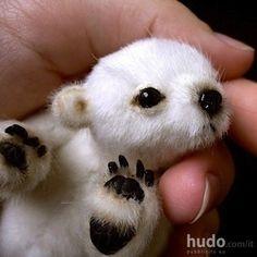 cucciolo di orso polare