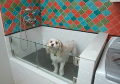dog washing station in laundry room pets ~ dog washing station in laundry room _ dog washing station in laundry room diy _ dog washing station in laundry room pets Dog Grooming Salons, Grooming Shop, Pet Grooming, Animal Room, Dog Bathing Station, Diy Dog Wash, Dog Tub, Pet Washing Station, Home Remodeling Contractors