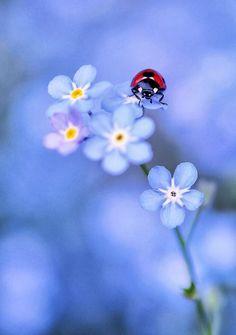 Ladybird & flower