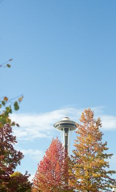 Seattle in the Fall - love the trees and the Space Needle is a must see!