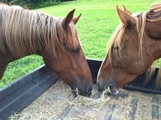 Why Supplement? Because Omega 3s Are Essential to Your Horse.