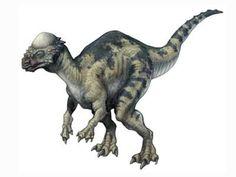 pachycephalosaurus.