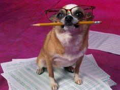 <b>Una clasificación definitiva de los momentos absolutamente más incómodos de perros de todos los tiempos.</b>