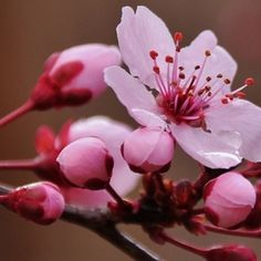 """""""Spring2014PhotoContest"""" by Roninator"""