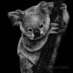 Melissa Helene   Blog: Art & Our World Endangered Species Series   Koala