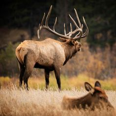 Crown of antlers Moose Deer, Moose Hunting, Big Deer, Deer Hunting Blinds, Archery Hunting, Pheasant Hunting, Turkey Hunting, Elk Pictures, Hunting Pictures