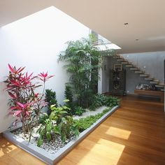 This is a really cool idea for an indoor garden. Love it!