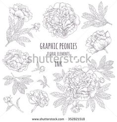 Hand-drawing ink peonies. Vector graphic flowers on white background. Collection contour buds, leaves peonies.  - stock vector