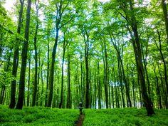Minion, Trunks, Plants, Drift Wood, Tree Trunks, Minions, Plant, Planets