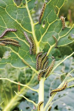 Managing Common Garden Pests: What Works, What Doesn't --  A nationwide reader survey reveals the best methods for managing common garden pests...