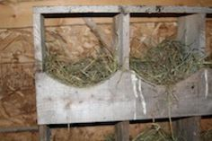 10 Tips to Help You Build a Chicken Coop: Create cozy nesting boxes.