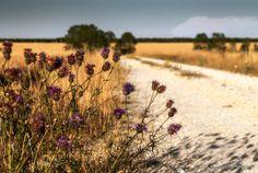 Flowers ~ Fotografía Juanjo Mediavilla