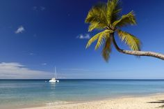 France, Martinique (French West Indies), Sainte Anne, Anse des Salines, coconut tree in the Salines beach ans catamaran off the Caribbean Sea